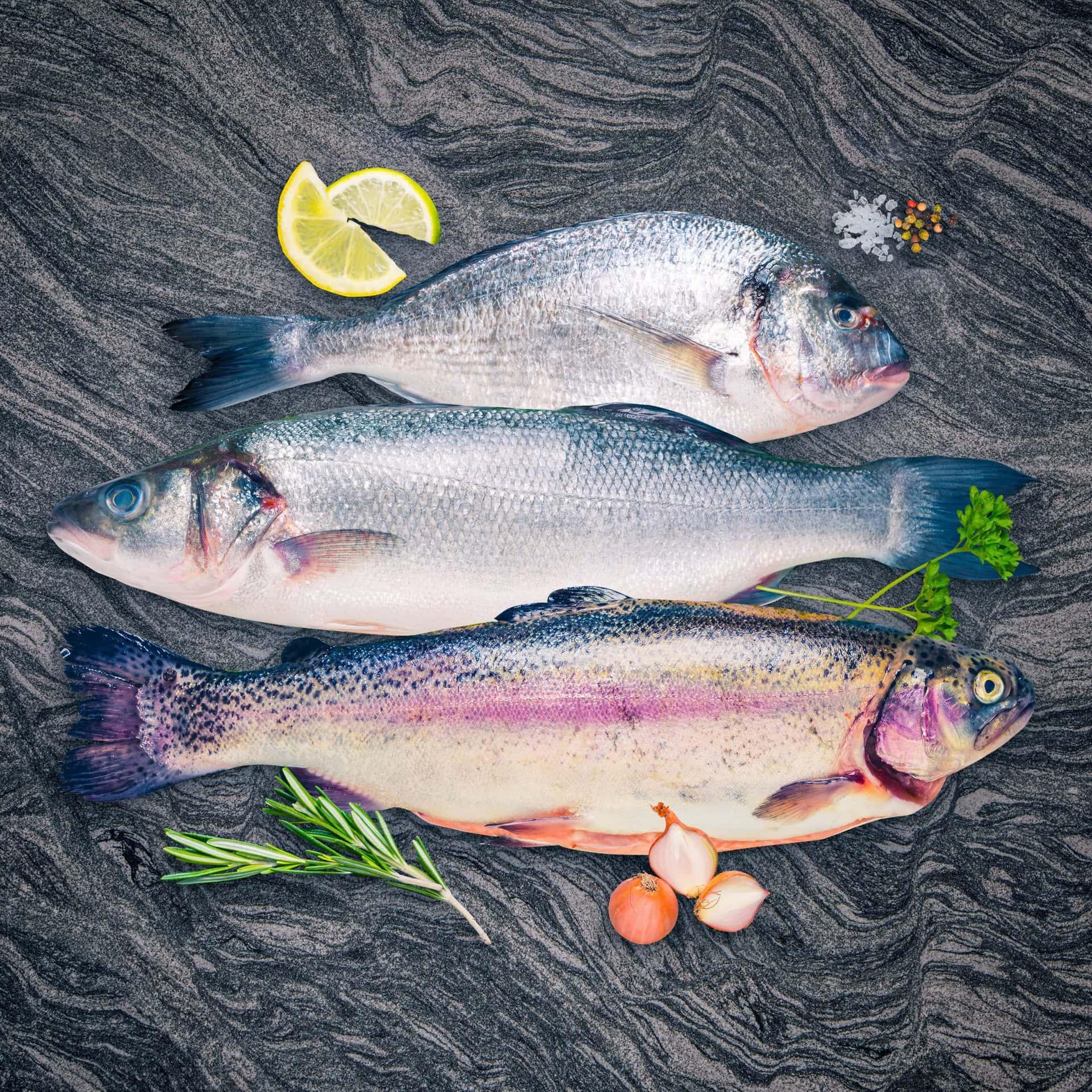 Sea bream, sea bass and rainbow trout